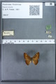 http://mczbase.mcz.harvard.edu/specimen_images/ent-lepidoptera/images/2009_12_16/IMG_027196.JPG