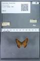 http://mczbase.mcz.harvard.edu/specimen_images/ent-lepidoptera/images/2009_12_16/IMG_027197.JPG