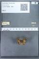 http://mczbase.mcz.harvard.edu/specimen_images/ent-lepidoptera/images/2009_12_16/IMG_027198.JPG