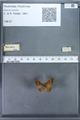 http://mczbase.mcz.harvard.edu/specimen_images/ent-lepidoptera/images/2009_12_16/IMG_027199.JPG