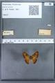 http://mczbase.mcz.harvard.edu/specimen_images/ent-lepidoptera/images/2009_12_16/IMG_027200.JPG