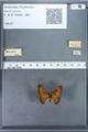 http://mczbase.mcz.harvard.edu/specimen_images/ent-lepidoptera/images/2009_12_16/IMG_027202.JPG