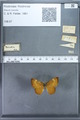 http://mczbase.mcz.harvard.edu/specimen_images/ent-lepidoptera/images/2009_12_16/IMG_027203.JPG