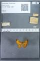 http://mczbase.mcz.harvard.edu/specimen_images/ent-lepidoptera/images/2009_12_16/IMG_027204.JPG