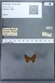 http://mczbase.mcz.harvard.edu/specimen_images/ent-lepidoptera/images/2009_12_16/IMG_027205.JPG