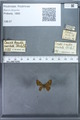http://mczbase.mcz.harvard.edu/specimen_images/ent-lepidoptera/images/2009_12_16/IMG_027206.JPG