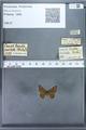 http://mczbase.mcz.harvard.edu/specimen_images/ent-lepidoptera/images/2009_12_16/IMG_027207.JPG