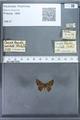 http://mczbase.mcz.harvard.edu/specimen_images/ent-lepidoptera/images/2009_12_16/IMG_027209.JPG