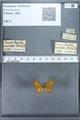 http://mczbase.mcz.harvard.edu/specimen_images/ent-lepidoptera/images/2009_12_16/IMG_027211.JPG