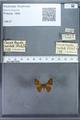 http://mczbase.mcz.harvard.edu/specimen_images/ent-lepidoptera/images/2009_12_16/IMG_027212.JPG