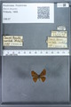 http://mczbase.mcz.harvard.edu/specimen_images/ent-lepidoptera/images/2009_12_16/IMG_027213.JPG