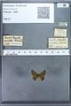 http://mczbase.mcz.harvard.edu/specimen_images/ent-lepidoptera/images/2009_12_16/IMG_027214.JPG