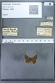http://mczbase.mcz.harvard.edu/specimen_images/ent-lepidoptera/images/2009_12_16/IMG_027216.JPG