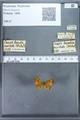 http://mczbase.mcz.harvard.edu/specimen_images/ent-lepidoptera/images/2009_12_16/IMG_027218.JPG