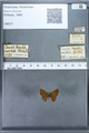 http://mczbase.mcz.harvard.edu/specimen_images/ent-lepidoptera/images/2009_12_16/IMG_027219.JPG