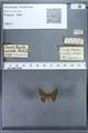 http://mczbase.mcz.harvard.edu/specimen_images/ent-lepidoptera/images/2009_12_16/IMG_027220.JPG