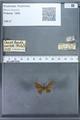 http://mczbase.mcz.harvard.edu/specimen_images/ent-lepidoptera/images/2009_12_16/IMG_027221.JPG