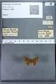 http://mczbase.mcz.harvard.edu/specimen_images/ent-lepidoptera/images/2009_12_16/IMG_027223.JPG