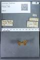 http://mczbase.mcz.harvard.edu/specimen_images/ent-lepidoptera/images/2009_12_16/IMG_027224.JPG