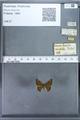 http://mczbase.mcz.harvard.edu/specimen_images/ent-lepidoptera/images/2009_12_16/IMG_027225.JPG