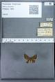 http://mczbase.mcz.harvard.edu/specimen_images/ent-lepidoptera/images/2009_12_16/IMG_027226.JPG