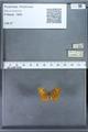 http://mczbase.mcz.harvard.edu/specimen_images/ent-lepidoptera/images/2009_12_16/IMG_027228.JPG
