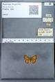 http://mczbase.mcz.harvard.edu/specimen_images/ent-lepidoptera/images/2009_12_16/IMG_027229.JPG