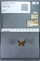 http://mczbase.mcz.harvard.edu/specimen_images/ent-lepidoptera/images/2009_12_16/IMG_027231.JPG