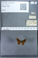 http://mczbase.mcz.harvard.edu/specimen_images/ent-lepidoptera/images/2009_12_16/IMG_027232.JPG