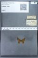 http://mczbase.mcz.harvard.edu/specimen_images/ent-lepidoptera/images/2009_12_16/IMG_027233.JPG