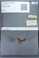 http://mczbase.mcz.harvard.edu/specimen_images/ent-lepidoptera/images/2009_12_16/IMG_027234.JPG