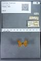 http://mczbase.mcz.harvard.edu/specimen_images/ent-lepidoptera/images/2009_12_16/IMG_027235.JPG