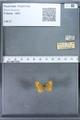 http://mczbase.mcz.harvard.edu/specimen_images/ent-lepidoptera/images/2009_12_16/IMG_027236.JPG
