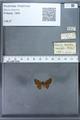 http://mczbase.mcz.harvard.edu/specimen_images/ent-lepidoptera/images/2009_12_16/IMG_027238.JPG