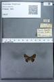 http://mczbase.mcz.harvard.edu/specimen_images/ent-lepidoptera/images/2009_12_16/IMG_027239.JPG