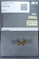 http://mczbase.mcz.harvard.edu/specimen_images/ent-lepidoptera/images/2009_12_16/IMG_027241.JPG