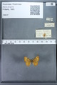 http://mczbase.mcz.harvard.edu/specimen_images/ent-lepidoptera/images/2009_12_16/IMG_027242.JPG