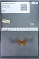 http://mczbase.mcz.harvard.edu/specimen_images/ent-lepidoptera/images/2009_12_16/IMG_027247.JPG
