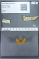 http://mczbase.mcz.harvard.edu/specimen_images/ent-lepidoptera/images/2009_12_16/IMG_027249.JPG