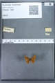 http://mczbase.mcz.harvard.edu/specimen_images/ent-lepidoptera/images/2009_12_16/IMG_027250.JPG