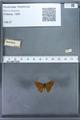 http://mczbase.mcz.harvard.edu/specimen_images/ent-lepidoptera/images/2009_12_16/IMG_027253.JPG