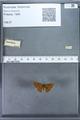 http://mczbase.mcz.harvard.edu/specimen_images/ent-lepidoptera/images/2009_12_16/IMG_027254.JPG