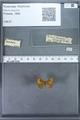 http://mczbase.mcz.harvard.edu/specimen_images/ent-lepidoptera/images/2009_12_16/IMG_027255.JPG
