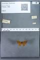 http://mczbase.mcz.harvard.edu/specimen_images/ent-lepidoptera/images/2009_12_16/IMG_027256.JPG
