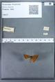 http://mczbase.mcz.harvard.edu/specimen_images/ent-lepidoptera/images/2009_12_16/IMG_027257.JPG