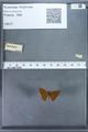 http://mczbase.mcz.harvard.edu/specimen_images/ent-lepidoptera/images/2009_12_16/IMG_027259.JPG