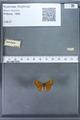 http://mczbase.mcz.harvard.edu/specimen_images/ent-lepidoptera/images/2009_12_16/IMG_027262.JPG