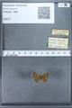 http://mczbase.mcz.harvard.edu/specimen_images/ent-lepidoptera/images/2009_12_16/IMG_027264.JPG