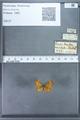 http://mczbase.mcz.harvard.edu/specimen_images/ent-lepidoptera/images/2009_12_16/IMG_027265.JPG