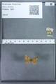 http://mczbase.mcz.harvard.edu/specimen_images/ent-lepidoptera/images/2009_12_16/IMG_027266.JPG